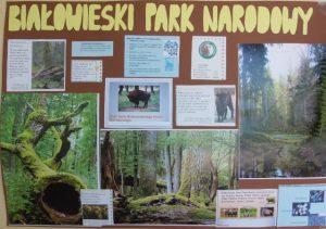 Wyniki Szkolnego Konkursu Na Plakat O Białowieskim Parku
